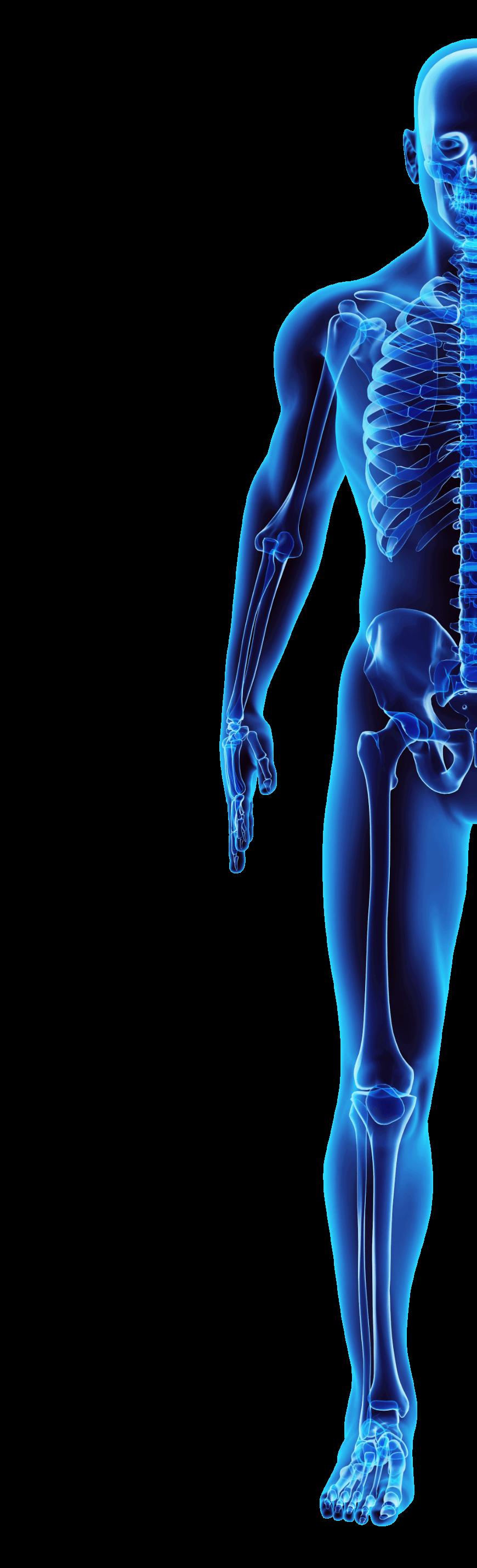 Illustration of human body.