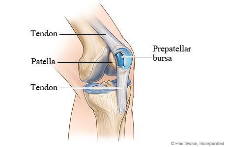 knee bursa.