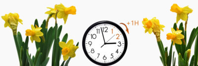 Clock moving forward surrounded by spring daffodils
